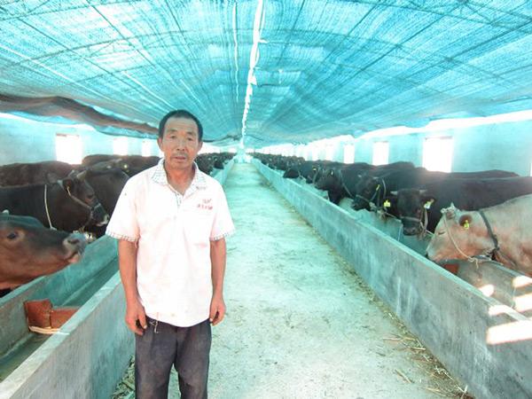 优良品种肉牛合作牧场